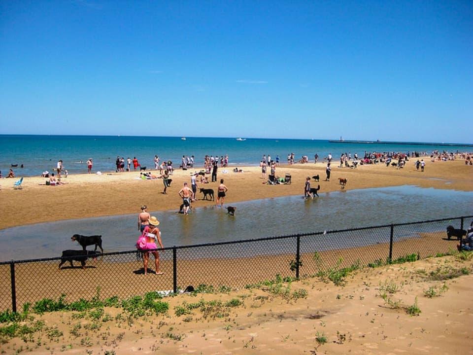 Dog Friendly Beache