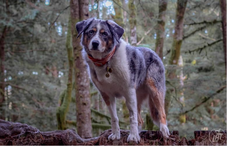 best adventure dog breed