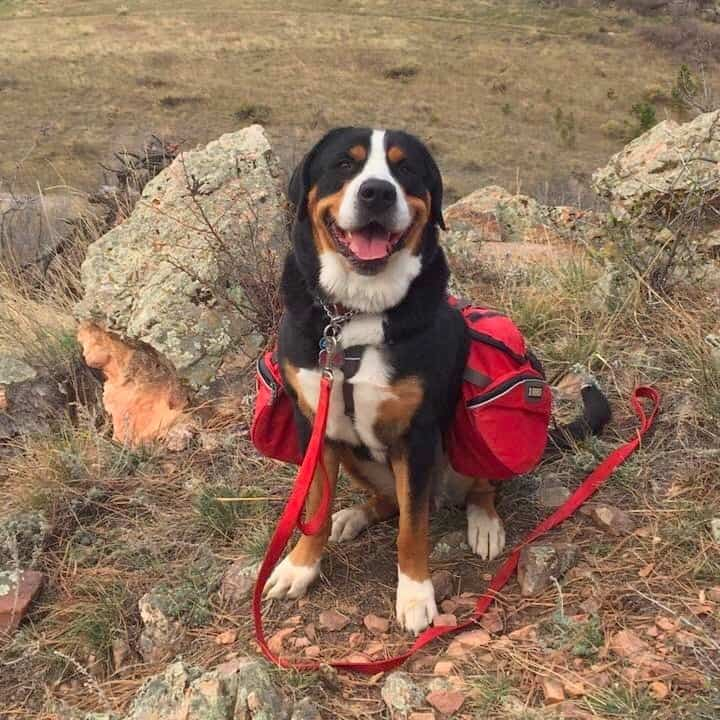 • Best dog for backpacking hiking