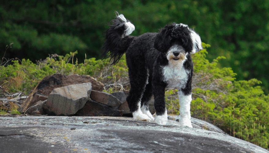 best great hiking buddy
