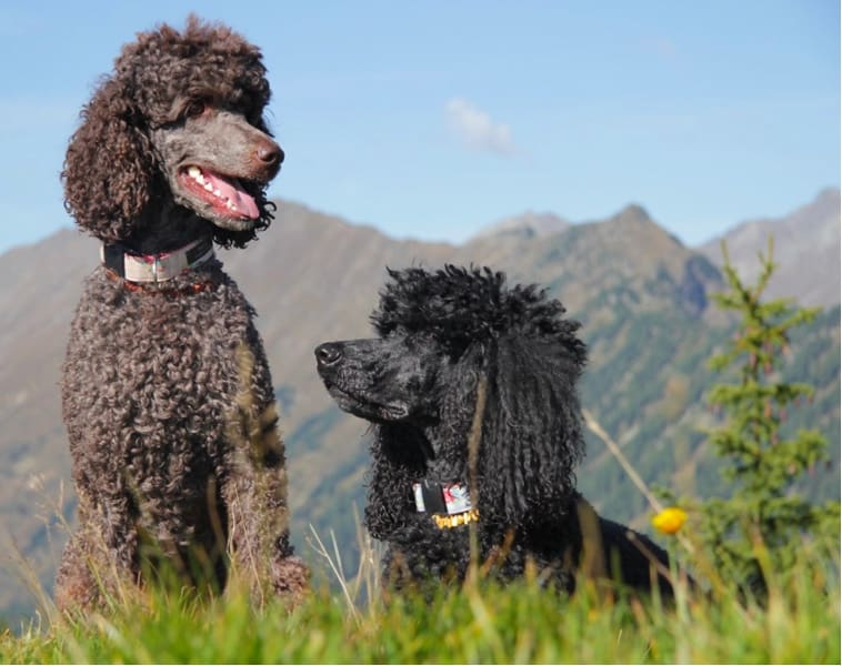 Best dogs for hiking that can be left alone