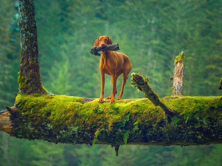 best dog for long hiking and camping trips