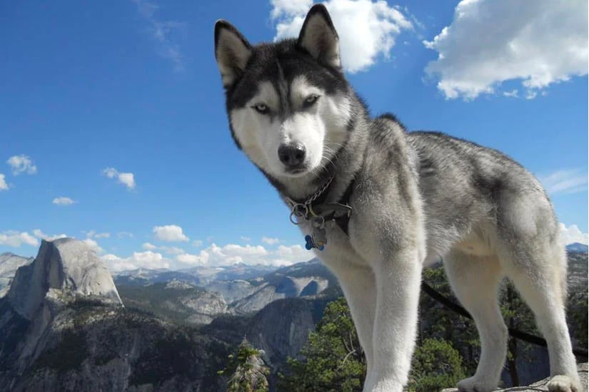 Best dog for hiking and camping