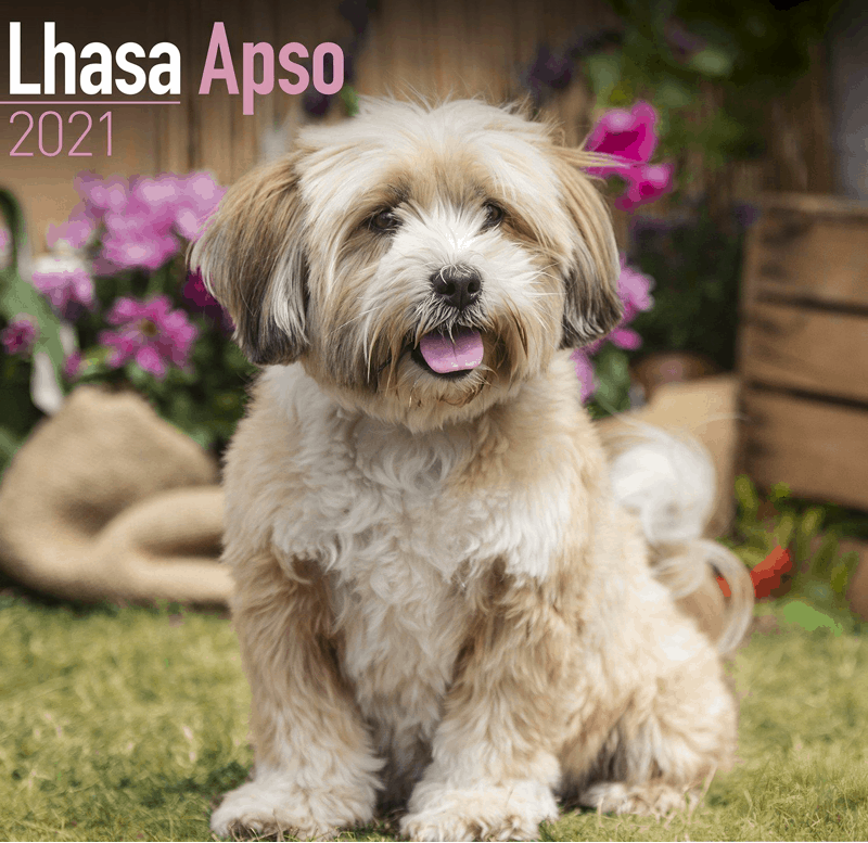 Lhasapoo