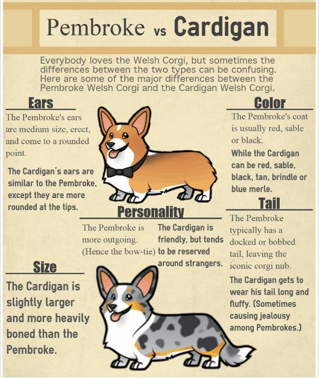Welsh Corgi Dog Breed Comparison